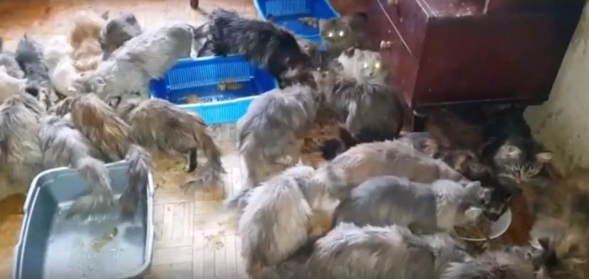 Зоошиза завела несколько десятков кошек в Ижевске