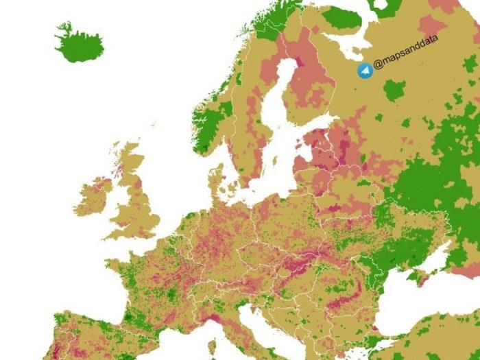 Как изменился лесной покров с 2015 по 2019 года